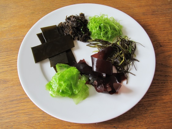 Sea weeds used in Seaweed tartar sauce. (clockwise from the green one at the top) Gutweed, Sea spaghetti, Dulse, Sea lettuce, Oarweed, Pepper dulse.