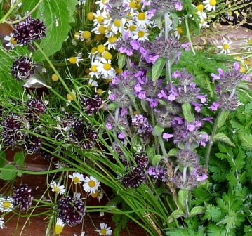 herbs of summer cropped sml