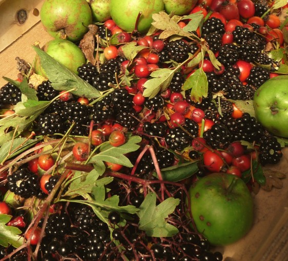 autumn hedgerow harvest