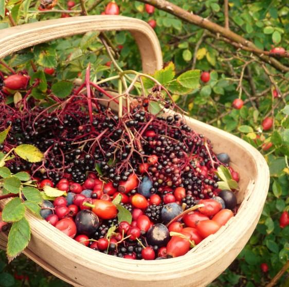 berry trug