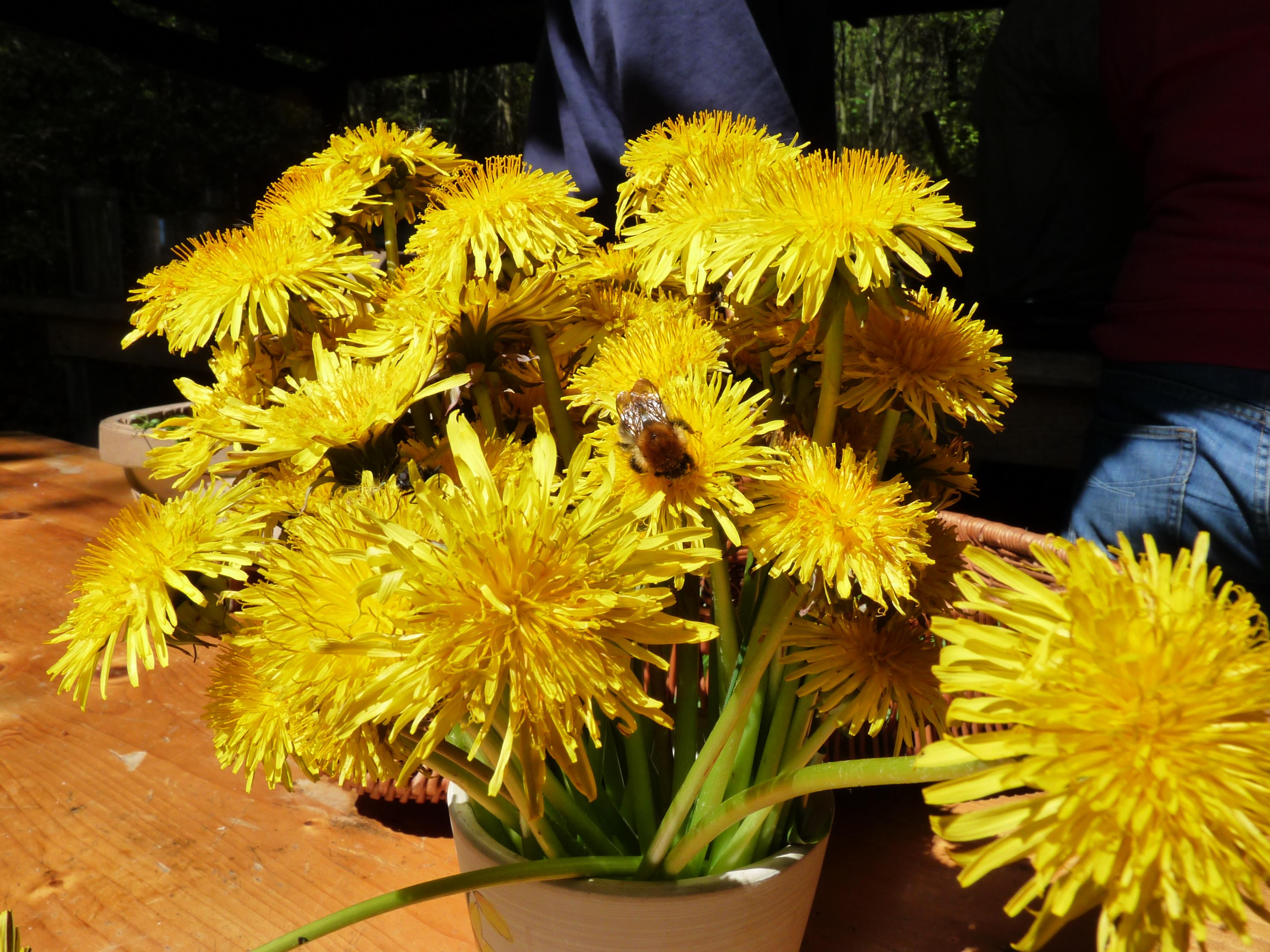 dandelion flowers.JPG
